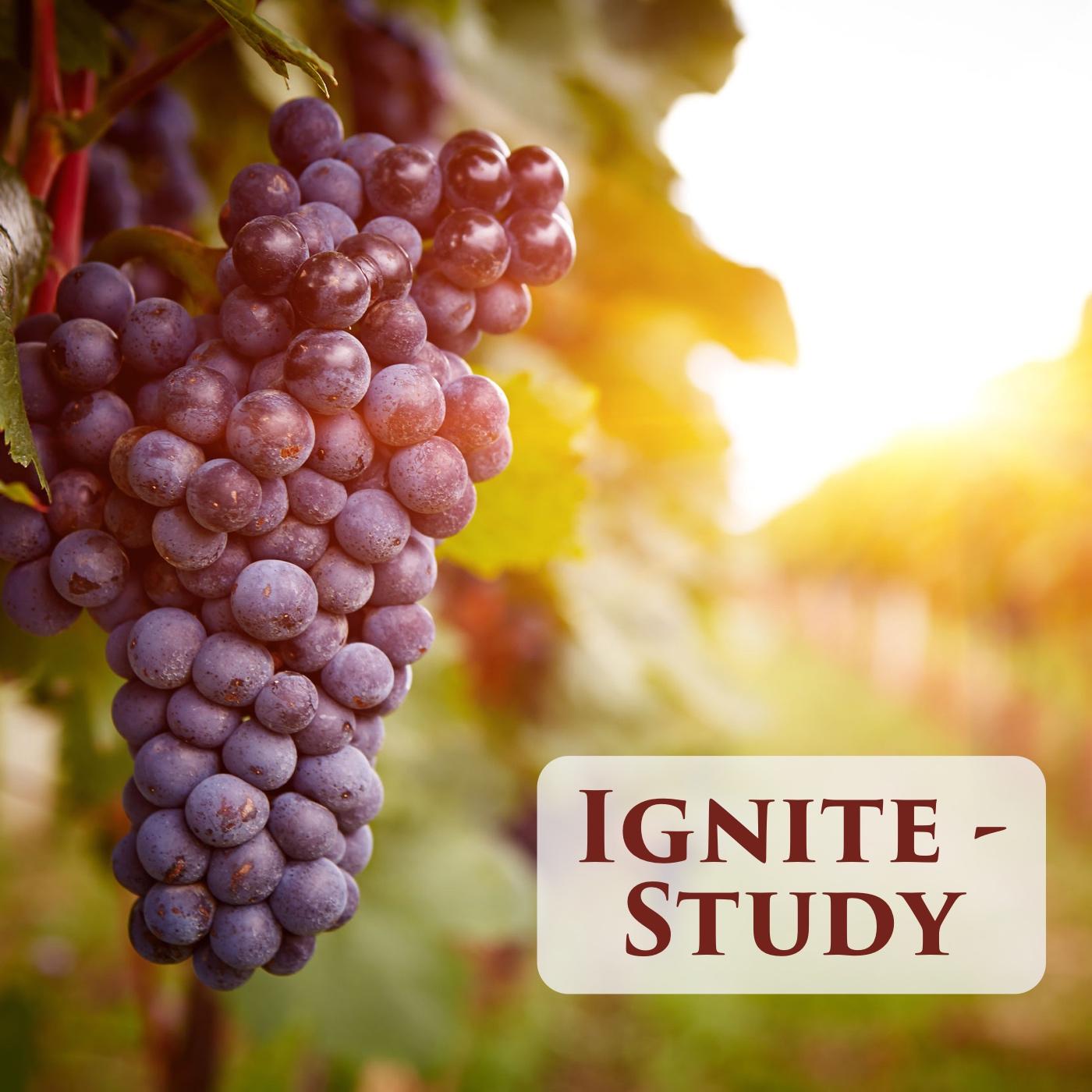 Ignite – Study